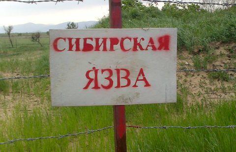 Sibirskay yazva