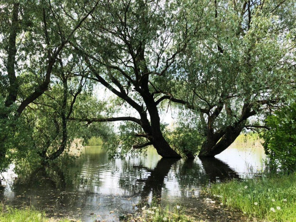 Reka Don Polovodie 2018 2